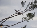 Eagles Mar1116 A1616