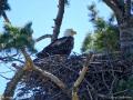 eagle11may16_02