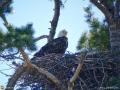 eagle11may16_03