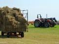 haying riverside albert
