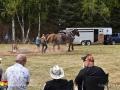 horse pull©LDD_5933