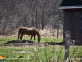 benton_horse_LDD_3247