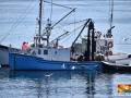 Herring Fishermen©LDD_6554