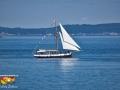 whale watching sailboat©LDD_6401