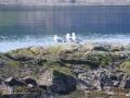 Deer-Island-July-15-0409