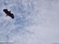 EagleDeerIslandNBSJR_2195