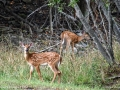 deer_island_deer_LDD_0847_HDR