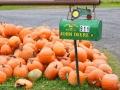 Pumpkin Harvest2015 089