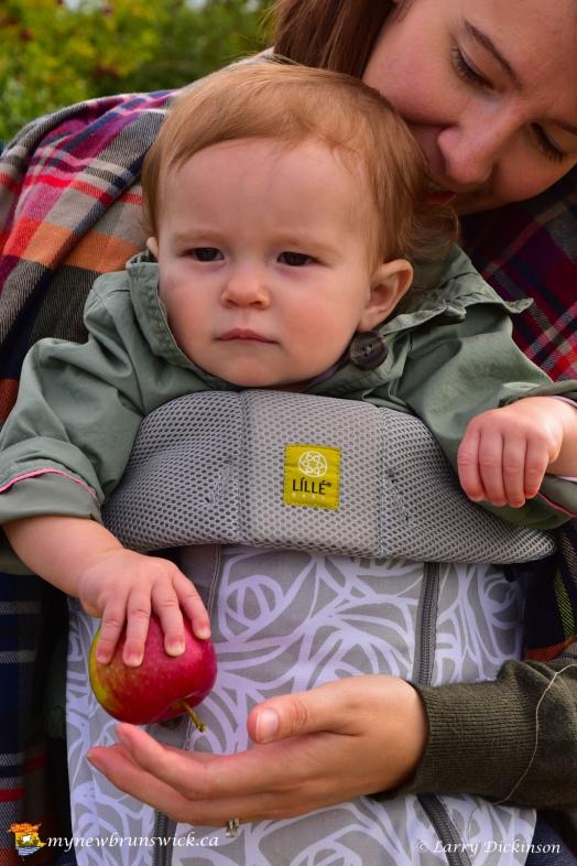 fall2016_kid_apple_picking_LDD_1507
