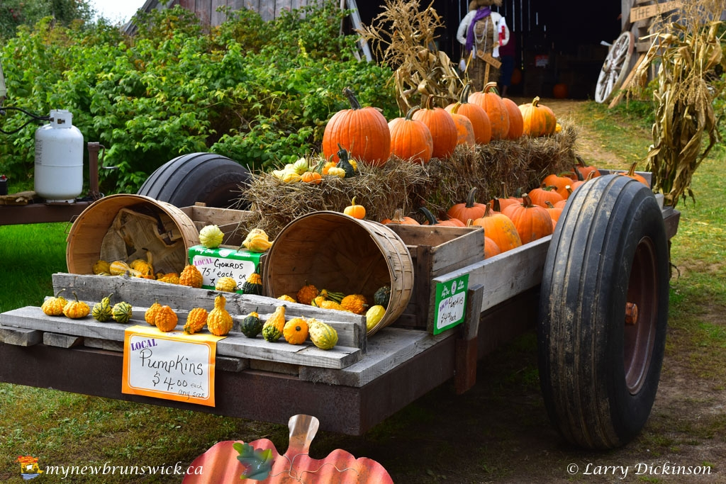 fall2016_pumpkin_wagon_LDD_1498