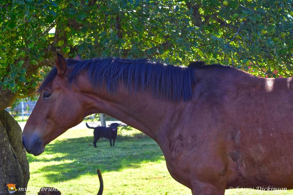 horse_LDD_1675
