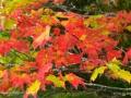 LeavesShogamocNBFallSJR_3848