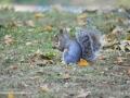 SquirrelSJR_3921