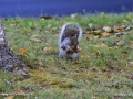 SquirrelSJR_3931