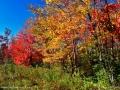 fall_colours_LDD_1654