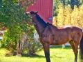horse_apple_LDD_1659