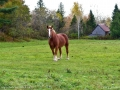 horse_burtts_corner_LDD_1799