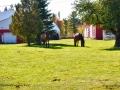 horses_LDD_1678