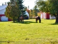 horsesSJR_1678