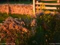 weeds_LDD_1586