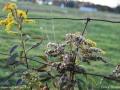 weeds_LDD_1596