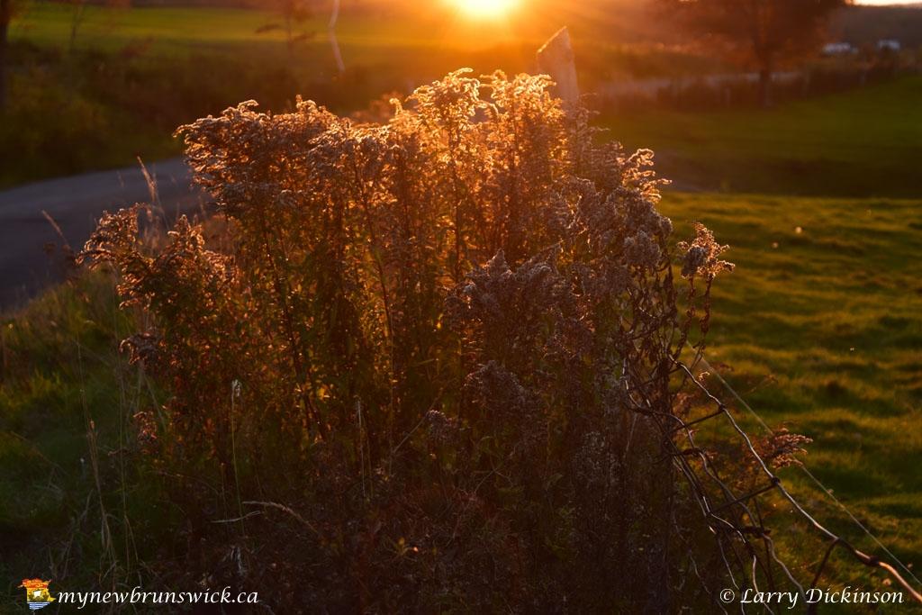 weeds_LDD_1595