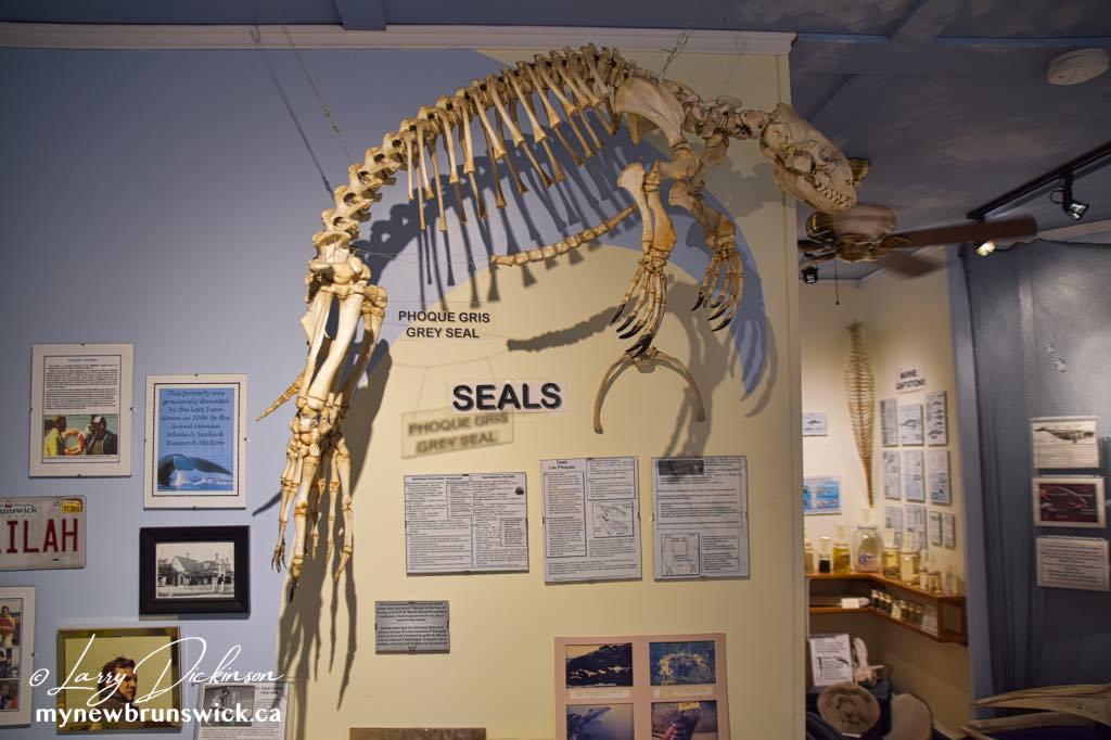 Gaskin Museum of Marine Life©LDD_9008