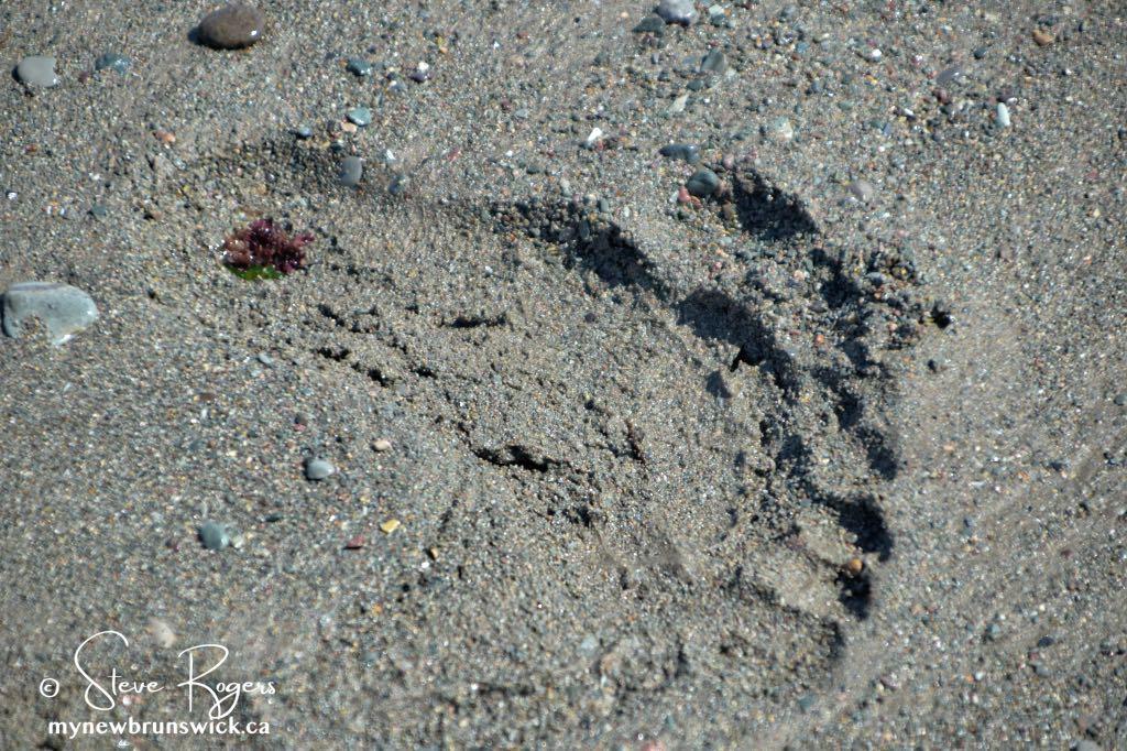 Long Point Beach Grand Manan ©SJR_8104