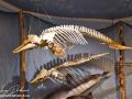 Gaskin Museum of Marine Life©LDD_9017