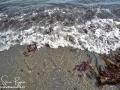 Long Point Beach Grand Manan ©SJR_8089