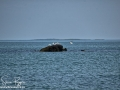 Long Point Beach Grand Manan ©SJR_8095