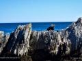 RocksWhaleCoveGrandMananNBSJR_2930