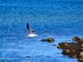SeagullPettesCoveGrandMananNBSJR_2971