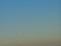 Seagulls&MoonGrandMananNBSJR_3051