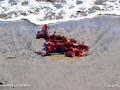 SeaweedSJR_2525