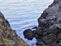 SwallowtailLighthouseCliffsGrandMananNBSJR_3015