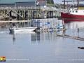 lobster©LDD_4427_HDR