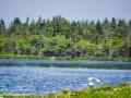 long point marsh©LDD_8942