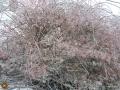 Ice storm dec201503