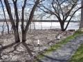 Fredericton Flood Update ©SJR_6591