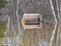flood thatch rd trail©LDD_7584