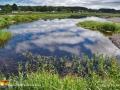 pond reflection pond©LDD_4899