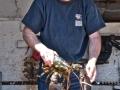 st martins lobster©LDD_4672