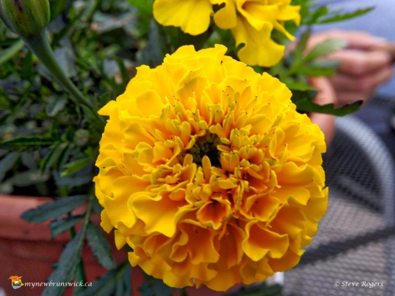 Flower20160908