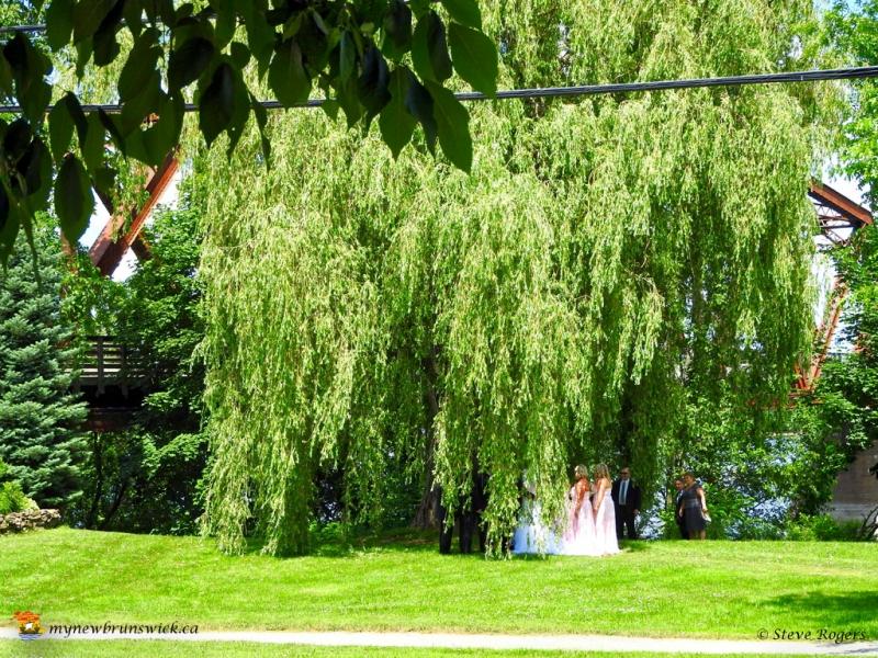 WeddingParty20160994