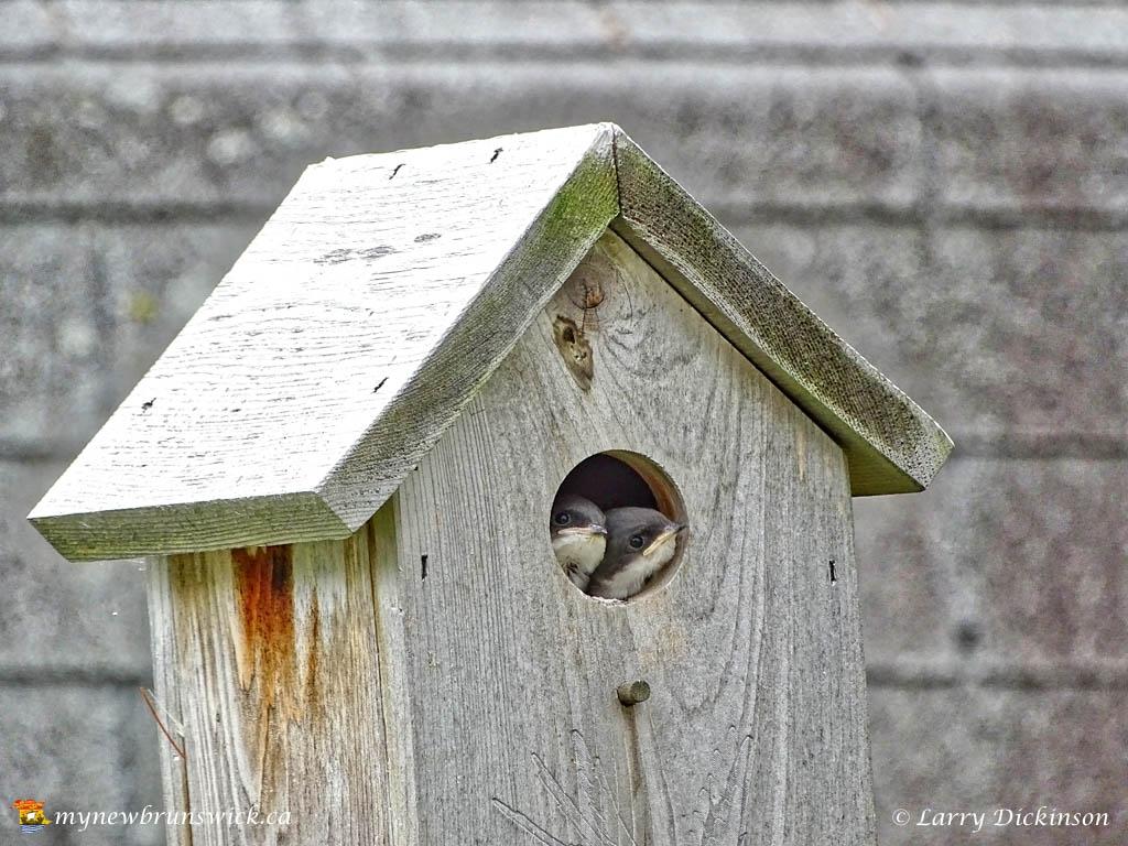 bird_babies