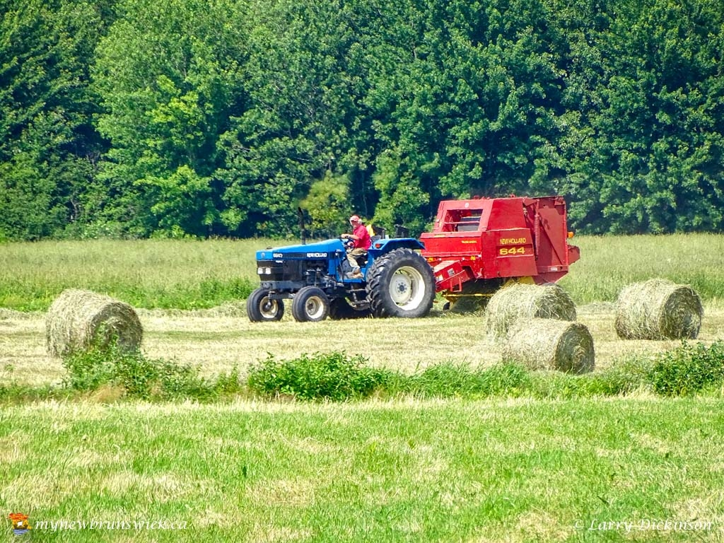maugerville_haying01