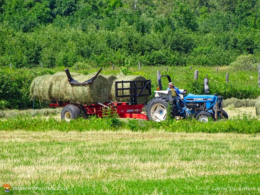 maugerville_haying02