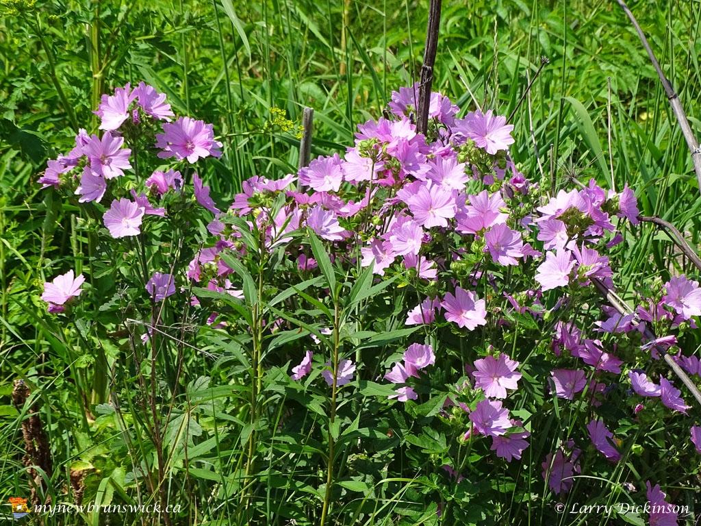 roadside_flowers2