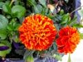 Flowers20160914